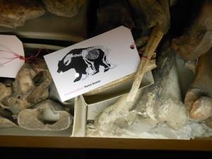 Herne - Museum für Archäologie_14_04_009
