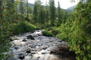 Hohe_Tatra_T5_14_07_020