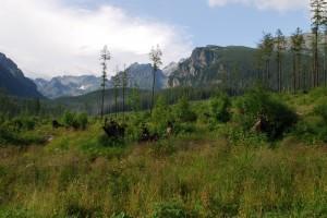 Hohe_Tatra_T5_14_07_026