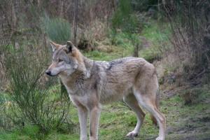 Haltern_Wildpark_Granat_15_02_001